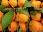 Tangerines at a Farmers Market — Stock Photo