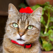 Cat face detail with green eyes and flowers — Stockfoto
