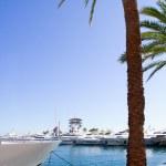 Calvia Puerto Portals Nous luxury yachts in Majorca — Stock Photo