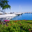 Calvia Puerto Portals Nous bougainvilleas garden in Mallorca — Stock Photo