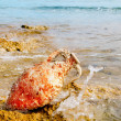 Amphora roman with marine fouling in Mediterranean — Stock Photo #6822297