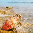 Amphora roman with marine fouling in Mediterranean — Stock Photo