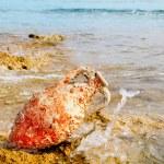 Amphora roman with marine fouling in Mediterranean — Stock Photo