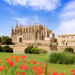Majorca Cathedral and Almudaina from red flowers garden — Stock Photo #6837943
