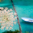 Balearic islands with wild carrot and turquoise Mediterranean - Stock Photo