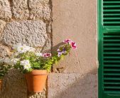 Plants pots in Valldemossa at Majorca Balearic island — Stock Photo