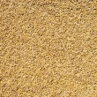 Cereal wheat grain texture pattern — Stock Photo