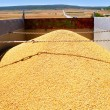 Cereal harvest wheat mound in truck — Stock Photo