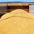Stock Photo: Cereal harvest wheat mound in truck