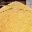Cereal harvest wheat mound in truck — Stock Photo #6916173
