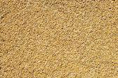 Patrón de textura de grano de cereal trigo — Foto de Stock