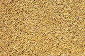 Cereal wheat grain texture pattern — Stock Photo