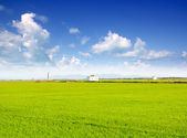 Green grass rice field in Valencia Spain — Stock Photo