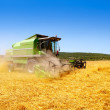 Foto de Stock  : Combine harvester harvesting wheat cereal