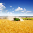 Стоковое фото: Combine harvester harvesting wheat cereal