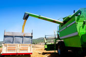 Combine harvester unloading wheat in truck — Stock Photo