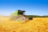 Combine harvester harvesting wheat cereal — Photo