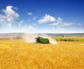 Combine harvester harvesting wheat cereal — Stockfoto