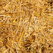 Cereal straw just after harvesting - Stockfoto