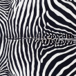 Zebra leather skin texture painted — Stock Photo #6950778