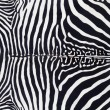 Zebra leather skin texture painted - Stock Photo
