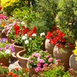 Spanish flowers garden detail in spain - 