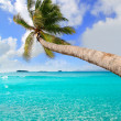 Palm tree in tropical perfect beach at Ibiza — Stock Photo