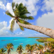 Palm tree in tropical perfect beach — Stock Photo