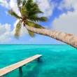 Palm tree in tropical perfect beach - Stok fotoğraf