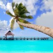 Palm tree in tropical perfect beach - Stock Photo