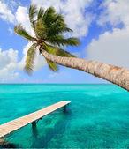 Albero di palma in spiaggia tropicale perfetta — Foto Stock