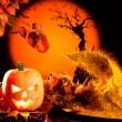 Halloween orange pumpkin on autumn leaves — Stock Photo #7044373