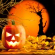 Halloween orange pumpkin on autumn leaves — Stock Photo #7047460