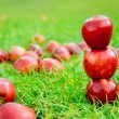 Three red apples stacked in grass field — Stock Photo #7105725