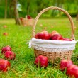 Apples in basket on a grass trees field — Photo