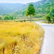 Golden grass field near road border — Stock Photo