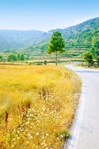 Golden grass field near road border — Stockfoto