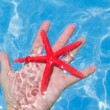 Red starfish in human hand floating — Stock Photo