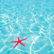 Red starfish floating on perfect tropical sea — Stock Photo