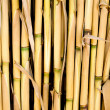 Cane texture used as fence or sunroof — Stock Photo