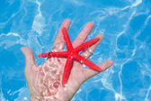 Red starfish in human hand floating — Foto Stock