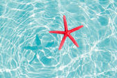 Floating red starfish in turquoise sand beach — Stock Photo