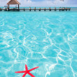 Stock Photo: Starfish as summer symbol in tropical beach