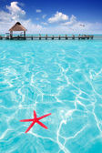 Starfish as summer symbol in tropical beach — Foto Stock
