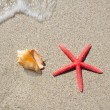Beach starfish and seashell on white sand — 图库照片