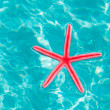 Red starfish floating on clean turquoise water - Zdjęcie stockowe