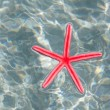 Red starfish floating in white sand beach - Stock Photo