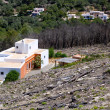 Stock Photo: Ibiza after fire in spring 2011