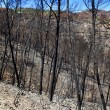 Ibiza after fire in May 2011 black spring — Stock Photo #7576529