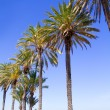 Ibiza Platja En bossa beach with palm trees - ストック写真